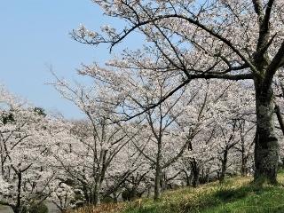 0409-04-hashi.jpg