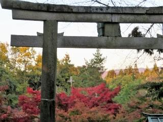 1122-02-konomi.jpg
