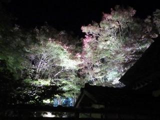 1125-05-kyorin.jpg